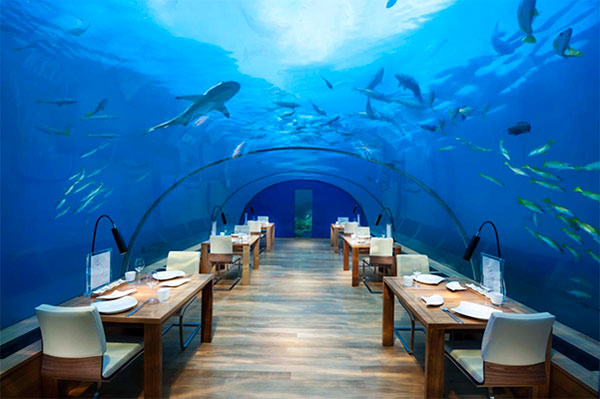 maldives-dine-undersea-glass